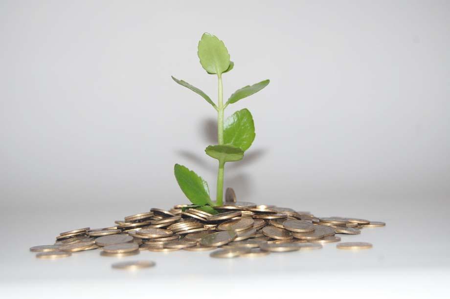 Eine Pflanze wächst aus einem Münzhaufen