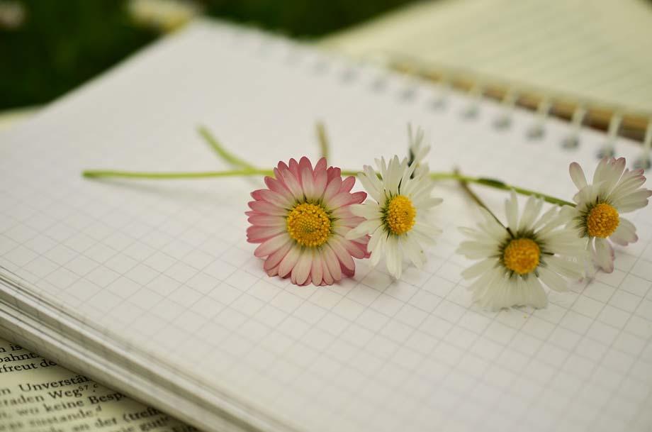 Notziblock mit Gänseblümchen